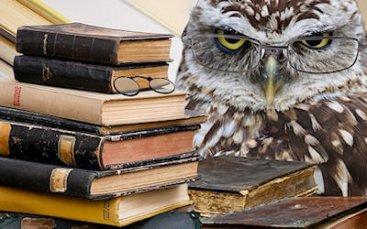 gufo con occhiali dietro scrivania piena di libri